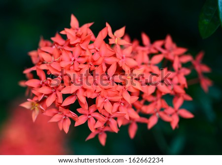 Soft-focus beautiful Red flower spike, Used as a background - stock photo