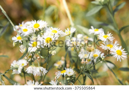 Soft focus,blurry of colorful flower.background