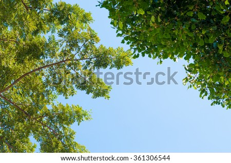 soft focus,blurry of trees and sky.background