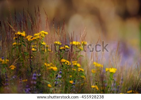 Soft-focus close-up of yellow and blue wild flowers in sunny meadows  - stock photo