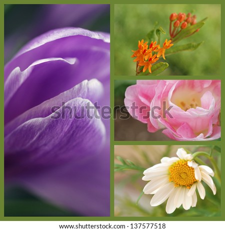 Soft focus floral collage includes crocus, milkweed blossoms, double tulip and  tiny daisy.  Macros with extremely shallow dof. - stock photo