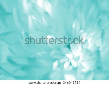 Soft focus flower in Blue - stock photo