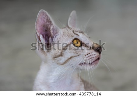 Soft focus lose up of cute little tabby kitten - stock photo