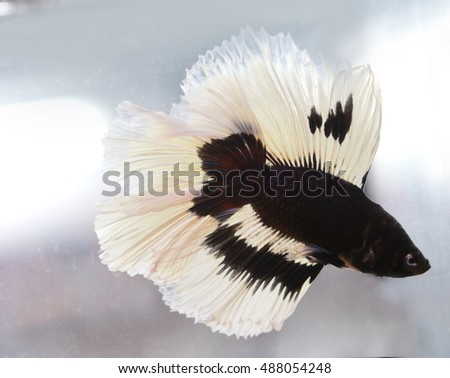 Half fish stock photos royalty free images vectors for Black and white betta fish