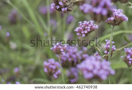 soft focus of little purple flower