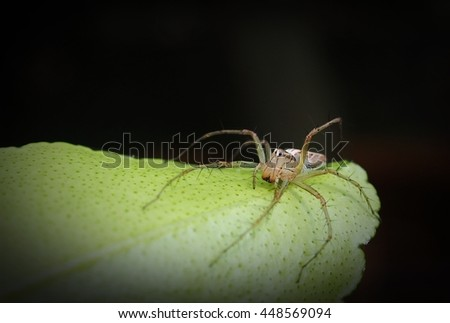 Soft Focus of of Lynx Spider  - Nature Macro Close Up - stock photo