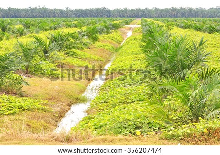 soft focus of replanting oil palm tree at the estate using block method - stock photo