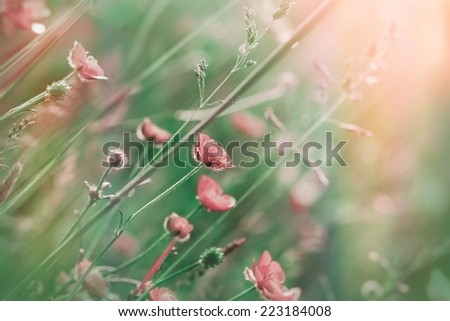 Soft focus on pink (purple) meadow flowers - stock photo
