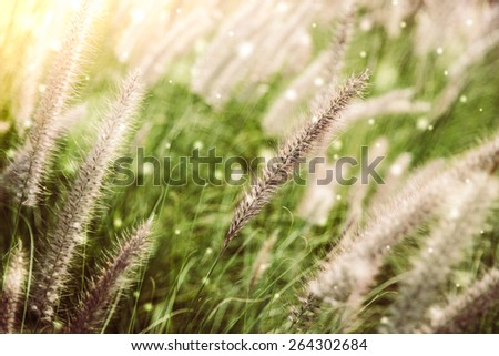 Soft focus on winter grass flower - vintage and snow effect - stock photo