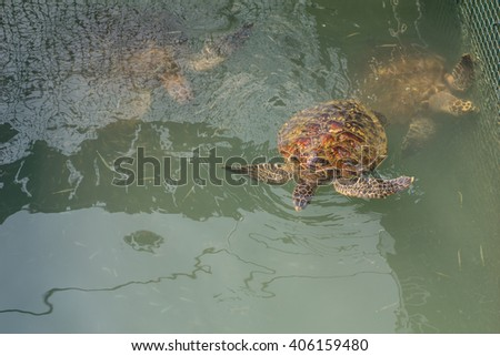 Soft focus Sea turtle Conservation of marine species - stock photo