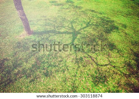 Soft focus, shadow of tree on green grass in vintage filter. - stock photo