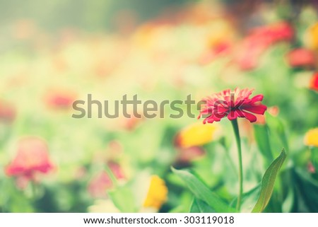 Soft focus, spring flower Meadow in vintage color tone.