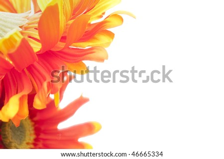 Soft focus technique gives this image of red and yellow gerbera gerber daisies an illustrative quality even though it is a photograph.
