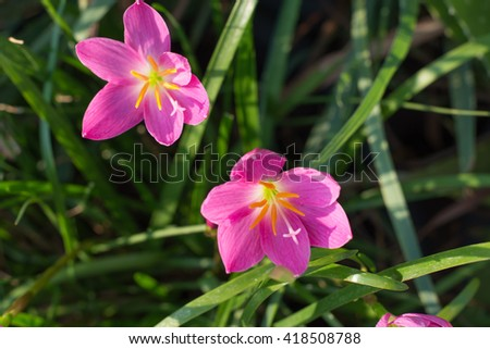 Soft focus Two pink flowers blooming - stock photo