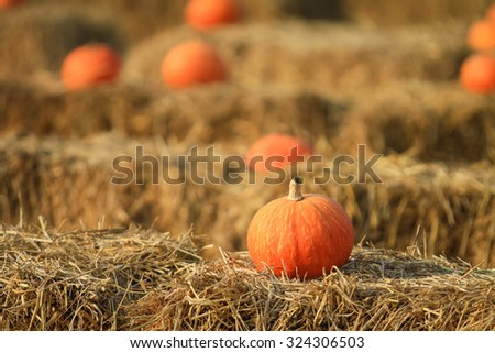 Soft focus with some pumpkin with hay for Fall decoration at market place