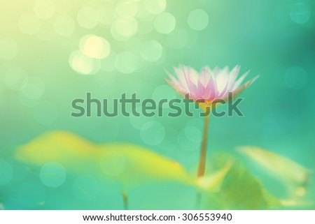 Soft focused image with lotus flower and blur bokeh background, De focused with flower and blur background, Abstract beautiful nature background - stock photo