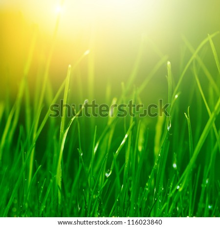 soft green grass background - stock photo