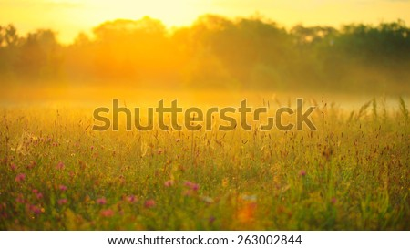 Soft image of meadow with spring flowers in sunlight early in the morning, during sunrise, with blurred background and nice pastel warm yellow colors - stock photo