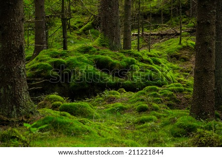 Soft mossy hill