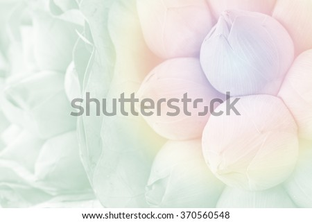 soft pastel tone of pink budding lotus flowers bouquet  - stock photo