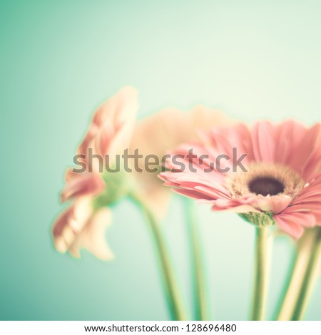 Soft Pink Flowers - stock photo