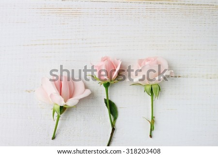 Soft pink pastel roses wooden surface delicate decorative background soft focus blank space - stock photo