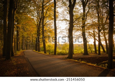 Soft Shadows of trees on a small road in the late evening sun