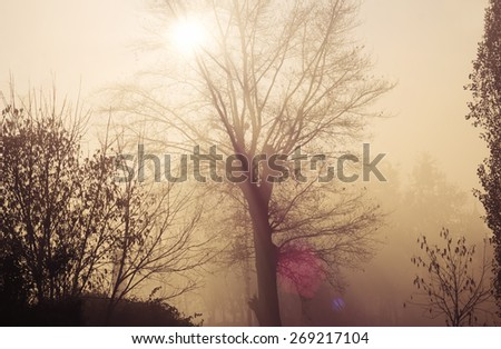 soft sunlit forest background - stock photo