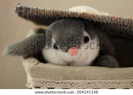 Soft toy - Bunny - stock photo