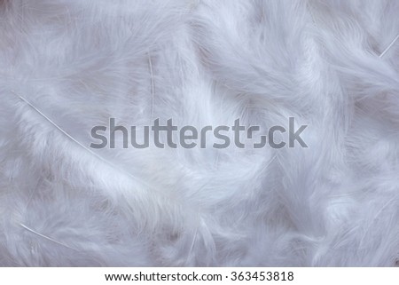 Soft white marabou feathers as an abstract background texture - stock photo