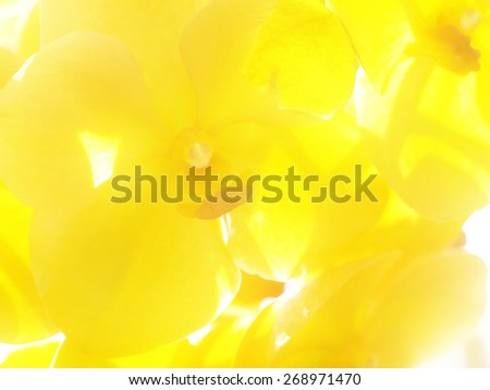 Soft yellow background with orchids. - stock photo
