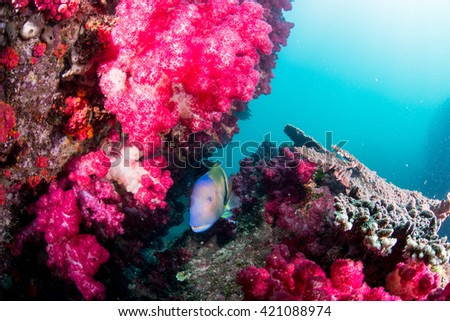 Softcoral and fish - stock photo