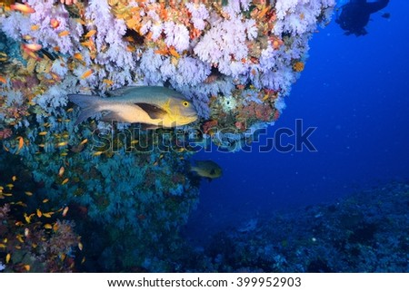 softcoral and fishes