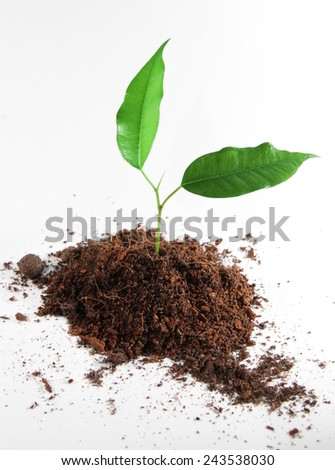 Soil and Plant - stock photo