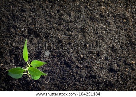 soil background with plant - stock photo