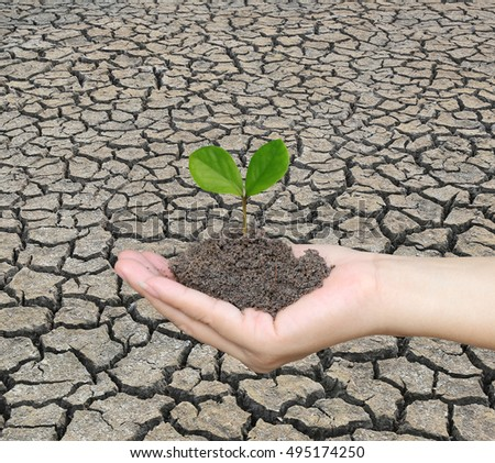 Soil in a Woman hand and treetop on soil with background cracked earth.