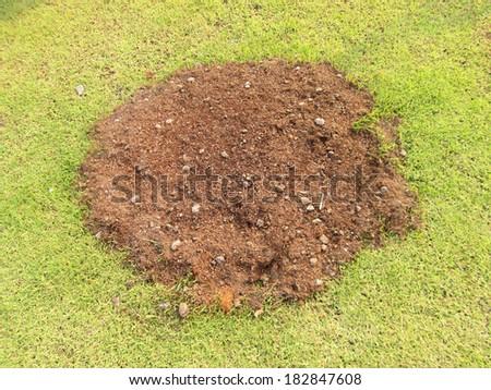 soil in green grass - stock photo