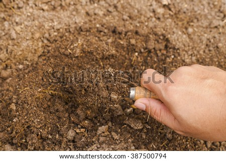 Soil in spoon.Gardening tools and soil for planting.