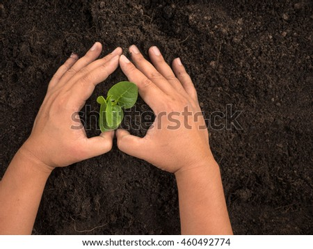 Soil,Plant,Seedling,Save Plant concept,Close up male hand planting and protected over black soil top view shot - stock photo