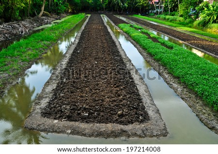 Soil preparation for cropping plant  - stock photo
