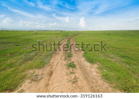 soil road between grass field with sky