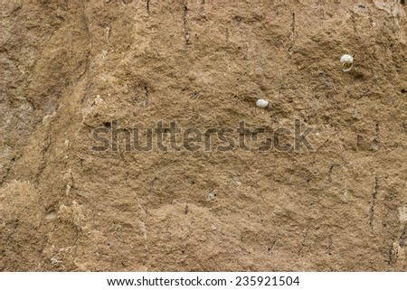 Soil texture with a snail shell background - stock photo