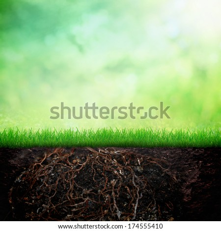 Soil with spring grass and tree leaf bokeh background - stock photo