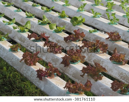 Soilless stock photos images pictures shutterstock for Soil less farming