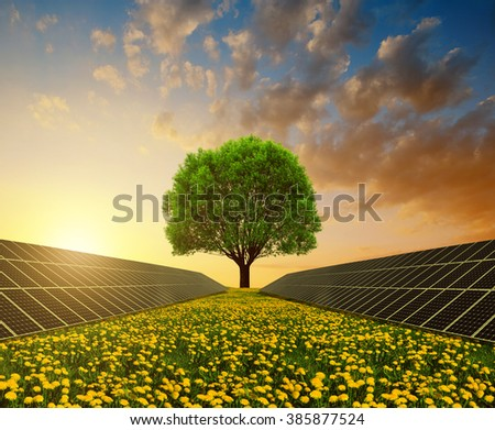 Solar energy panels with tree against sunset sky.Clean energy. - stock photo
