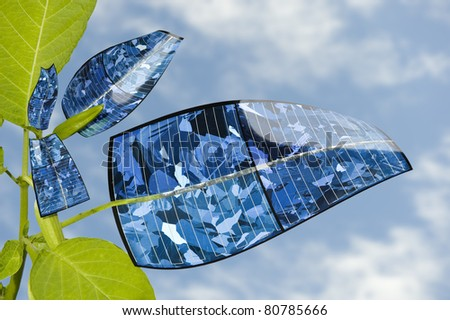 Solar panel plant against the blue sky. Evolution of the leaf.
