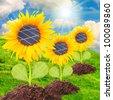 Solar panels on the sunflowers. Environmental concept. Pure energy metaphor. - stock photo
