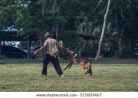 Soldiers from the K-9 unit demonstrations to attack the enemy , the green lawns , German Shepherd dog stand.