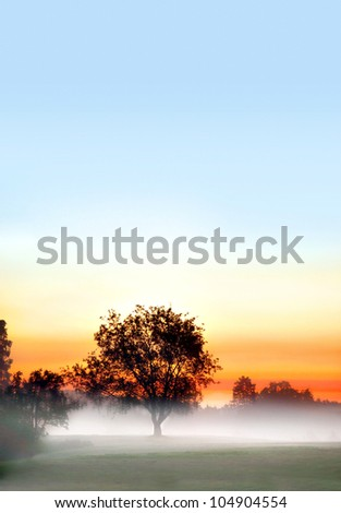 solitaire tree in fog in early morning on colorful sky - stock photo