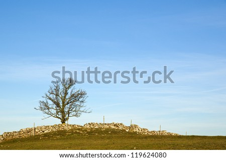 Solitaire tree on top - stock photo